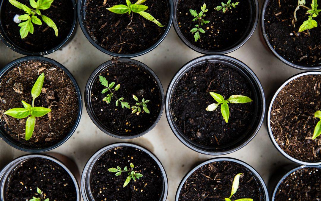 Décorez facilement votre jardin