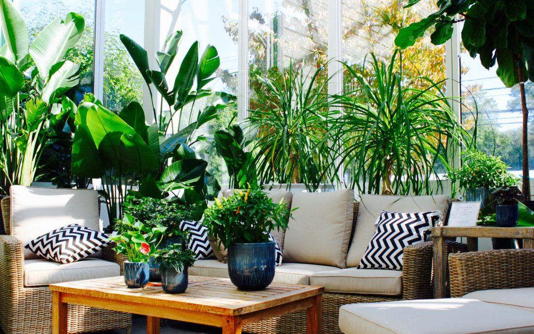 Quelles plantes extérieures pour votre jardin?