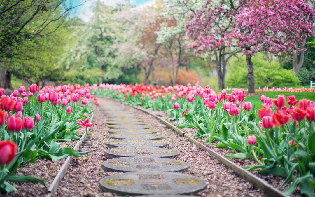 Quelles sont les petites astuces à connaître pour avoir un beau jardin ?
