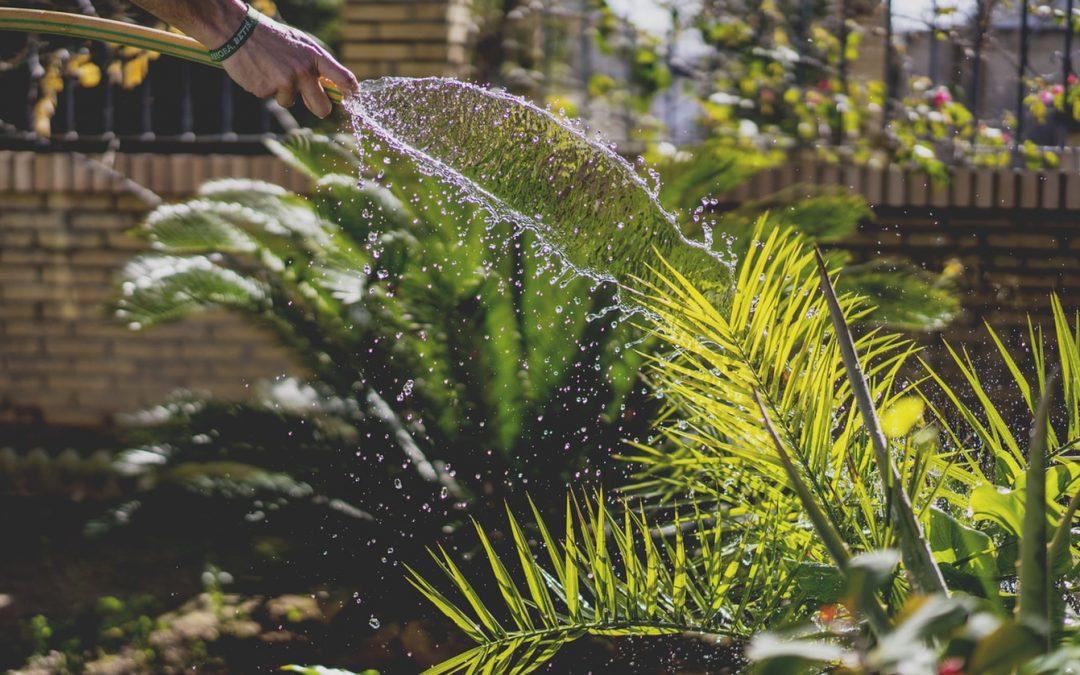 Comment faire pousser un jardin en terrasse ?